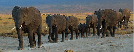 Smart Elephants   Teaching and learning   Scoop.it