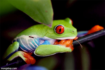 Could zooplankton save frogs from deadly epidemic? | AJC's Frogroom | Scoop.it