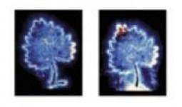 Las constelaciones y los campos morfogenéticos | CONSTELACIONES FAMILIARES | Scoop.it