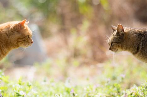 Neko blog, les chats du Japon à l'honneur - DozoDomo   Funny and crazy cats   Scoop.it