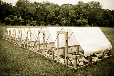Stress Free Chicken Tractor Plans | Chicken tractors make pastured poultry happy! | Hunting | Scoop.it