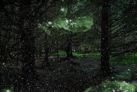 Mystical Photos of Illuminated Forests in the UK by Ellie Davies | Le It e Amo ✪ | Scoop.it