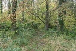 Brin de paille – Permaculture et Permacul-teur/trice-s | du village autonome... | Scoop.it