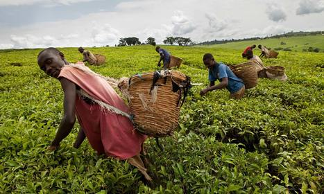 (Un)Fairtrade: is it time we looked beyond the label? - The Guardian | Fair trade | Scoop.it