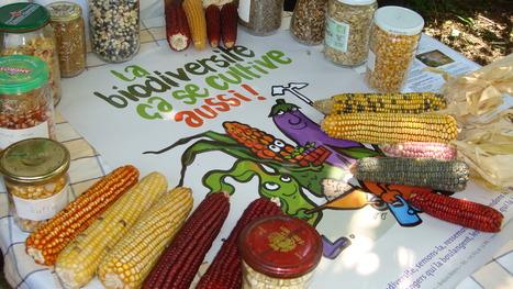 | Campagne pour une loi de reconnaissance positive des droits des agriculteurs par la libération des semences paysannes et fermières | caravan - rencontre (au delà) des cultures -  les traversées | Scoop.it
