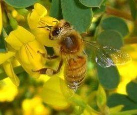 Affaire Cruiser : nouvelle victoire de l'UNAF - News Press (Communiqué de presse) | apiculture 2.0 | Scoop.it
