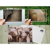 Proboscidea - The emotional lives of elephant | Pachyderm Magazine | Scoop.it
