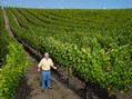 Wine Turns Mortgage Title Mogul Into Entrepreneur of Viticulture | Vitabella Wine Daily Gossip | Scoop.it