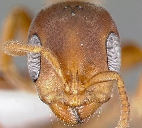 Comment un arbre mène des fourmis à l'esclavage | Bio3D | Scoop.it