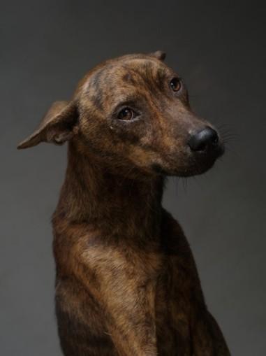 Des portraits de chiens dans le couloir de la mort – Lense.fr | Histoire de chats | Scoop.it