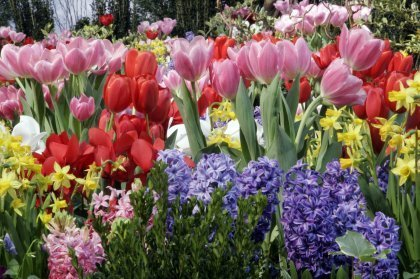 Tips for Planting Fall Flower Bulbs… « For more information on TUFF GUARD's Garden Hose call Customer Service at (315) 451-2770 | Annie Haven | Haven Brand | Scoop.it