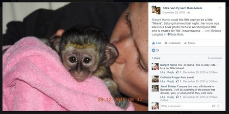 "Visit Bambelela to Meet Baby Vervet Monkey ""Nikela"" | Wildlife Conservation: People and Stories | Scoop.it"