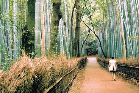 Tech workers turning to Japanese practice of 'forest bathing' to unplug | Unplug | Scoop.it