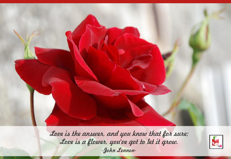 The best flowers and #gift come from the heart, not the store. | BlossomSquare online flowers delivery system | Scoop.it