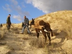 Office National de Forêts - Grains de sable - Lettre d'informations sur la gestion des espaces naturels littoraux | Espaces naturels littoraux | Scoop.it