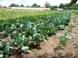 Arte : Les nouveaux paysans » La ferme du Hanneton | Du bout du monde au coin de la rue | Scoop.it