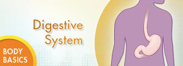 Digestive System | Human Body Systems | Scoop.it