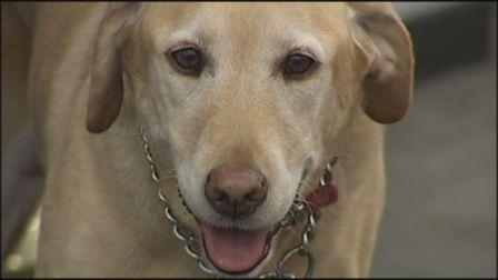 Tucson Fire Department dog retires | Fire Safety | Scoop.it
