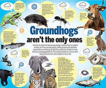 Animals with weather predicting capabilities | Groundhog Day | Scoop.it
