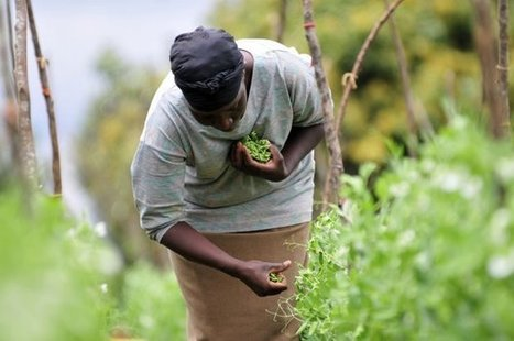 What is the potential impact from climate change for Africa's farmers? | CCAFS: CGIAR research program on Climate Change, Agriculture and Food Security | Climate-Smart Africa | Scoop.it