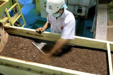 Les fonds spéculatifs se ruent sur le cacao | Questions de développement ... | Scoop.it