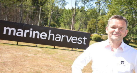 Marine Harvest quits Chilean trade body | Aquaculture Directory | Aquaculture Directory | Scoop.it