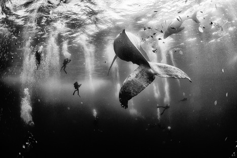 In Search of Whales by Anuar Patjane | Baja California | Scoop.it