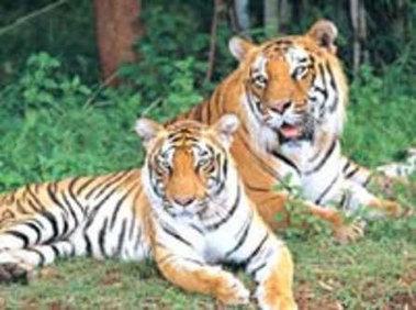 Bannerghatta National Park - Hoysala Village Resort's Travel Picks | Incredible Karnataka | Scoop.it