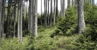 Beneficios económicos, sociales y ambientales de la gestión forestal sostenible de los bosques europeos | Ordenación del Territorio | Scoop.it