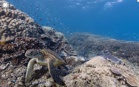 "Google unveils first-ever underwater ""street-view"" (and it's amazing) 