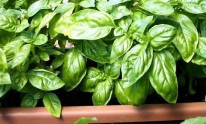 Mini-orto da balcone: le 5 piante più facili da coltivare - Tuttogreen | About gardening | Scoop.it