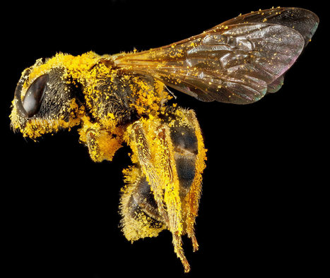 Beautiful, Intimate Portraits of Bees -- National Geographic   Sustain Our Earth   Scoop.it