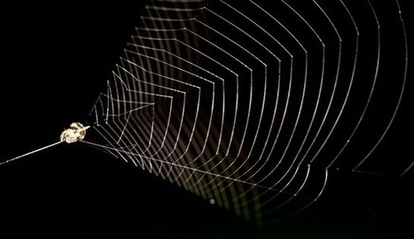 Redécouverte de l'araignée qui tend et relâche sa toile pour attraper ses proies volantes (vidéo) | EntomoNews | Scoop.it