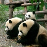 Google Panda Update: Cutts Confirms Another Tweak | SEO Tips, Advice, Help | Scoop.it