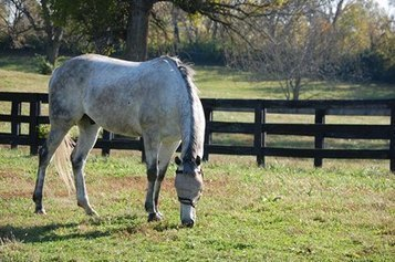 Rest and Recovery after Three-Day Events   Equine Health Care   Scoop.it