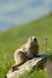 Pensez-vous comme un trader ou comme une marmotte ? | Trading-attitude | Scoop.it