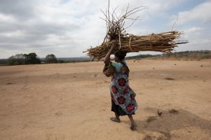 Africa, an agricultural powerhouse?   plant research   Scoop.it