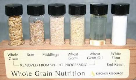 What's wrong with modern wheat? | GRAINSTORM | Opportunity Times | Scoop.it