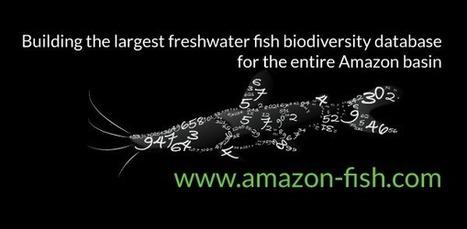 Amazon Fish Project | Home | Rainforest EXPLORER:  News & Notes | Scoop.it