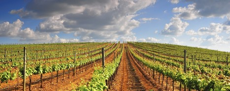 Alentejo, the land where most corks come from, delivers great #wine too | Vitabella Wine Daily Gossip | Scoop.it