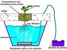 Hidroponia y Cultivos Hidroponicos: SISTEMA RAIZ FLOTANTE EN ... | Cultivos Hidropónicos | Scoop.it