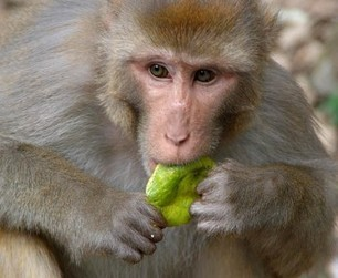 Une étude majeure prouve qu'on peut vivre plus longtemps en mangeant moins | Planète Paléo | Scoop.it