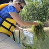 Blue green algae causing neurodegenerative diseases