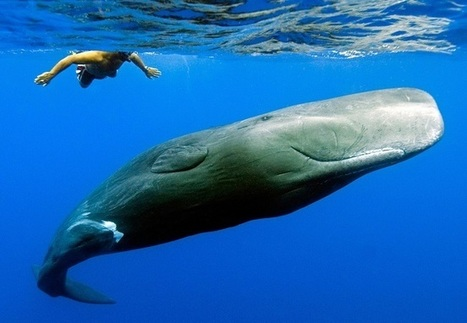 Top 10 Loudest Animals In The World - TopYaps   Interesting Facts   Scoop.it