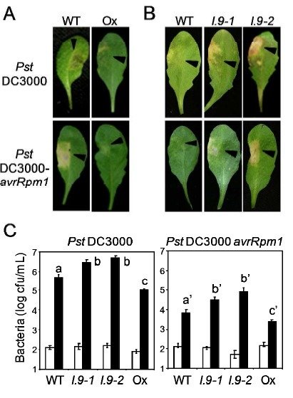 The Arabidopsis thaliana lectin receptor kinase LecRK-I.9 is required for full resistance to Pseudomonas syringae and affects jasmonate signalling - Molecular Plant Pathology | Extracellular ATP and ectoapyrase in plants | Scoop.it