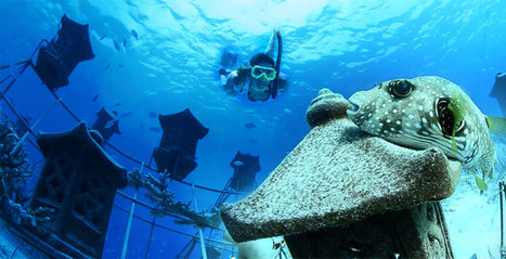 Ils plantent 8000 coraux pour redonner vie aux récifs   Economie Responsable et Consommation Collaborative   Scoop.it
