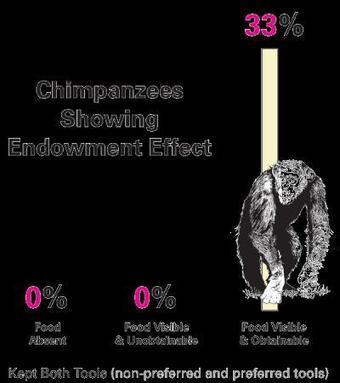 Nano Patents and Innovations: Chimpanzees Teach Us Economic ... | Psychology Professionals | Scoop.it