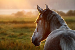 Do Individual Horse Owners Need Liability Insurance? - Los Angeles Lawyer and Law Firm | Catanese & Wells | Equine Law | Scoop.it