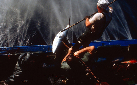 New UN-backed initiative to drive advances in high seas fisheries management - UN News Centre | flatfish-management | Scoop.it