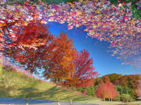 16 Wonderful Pictures of Floating Leaves | Scoop Photography | Scoop.it